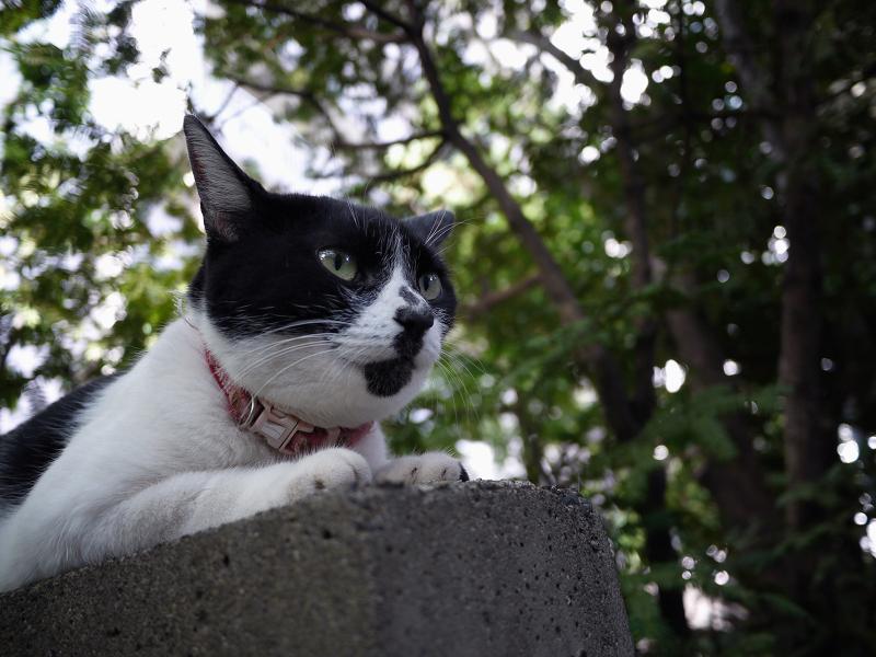 塀の上で佇む白黒猫