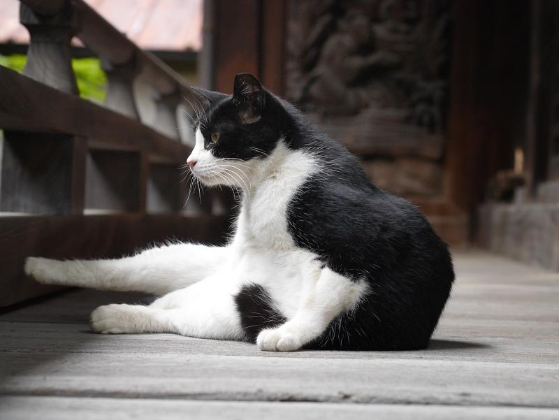 神社の濡縁の黒白猫2