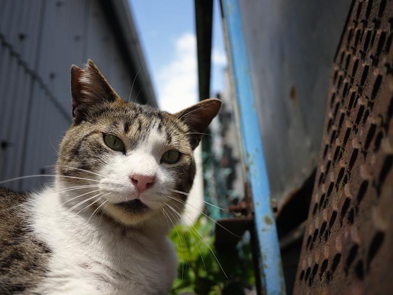 狭いスペースのキジ白猫02