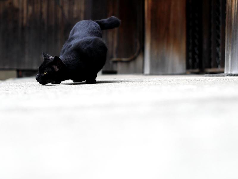 お堂の横で転がる黒猫のコマ送り1