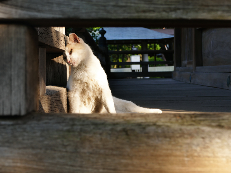 濡れ縁で不思議ポーズの茶白猫
