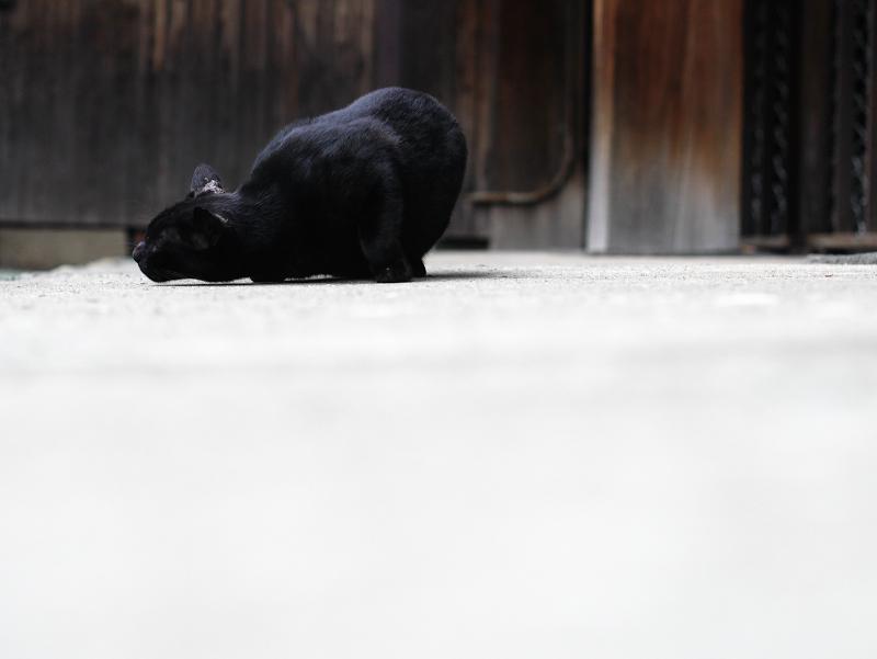お堂の横で転がる黒猫のコマ送り2