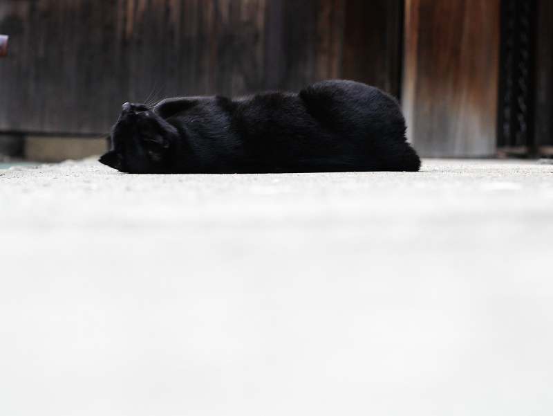 お堂の横で転がる黒猫のコマ送り3