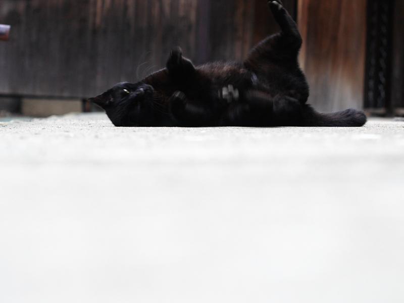お堂の横で転がる黒猫のコマ送り4