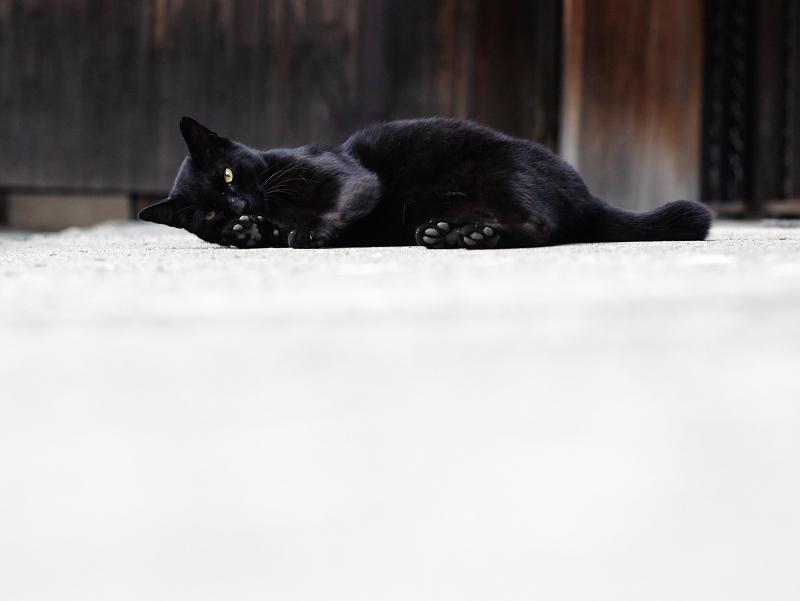 お堂の横で転がる黒猫のコマ送り5