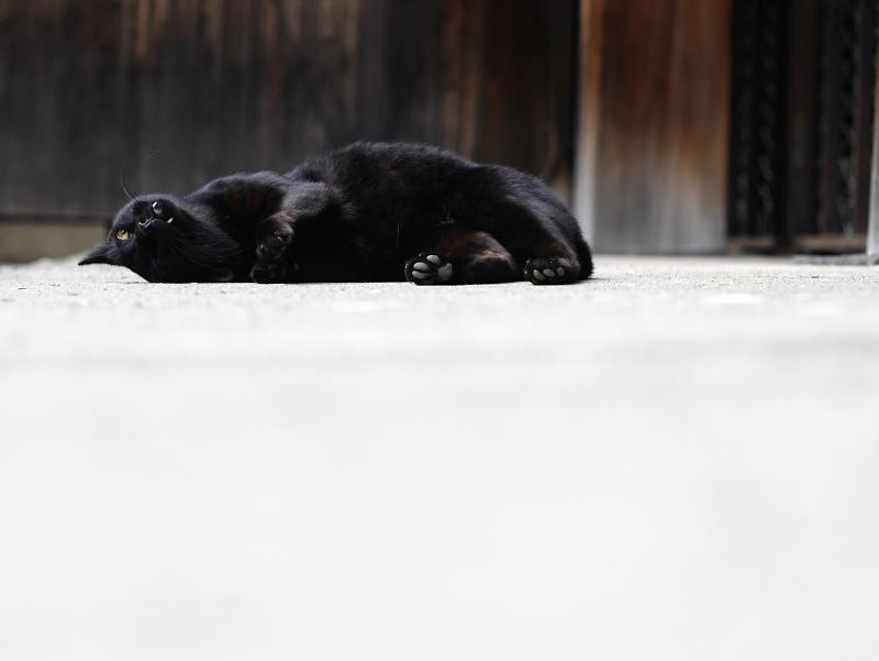 お堂の横で転がる黒猫のコマ送り6