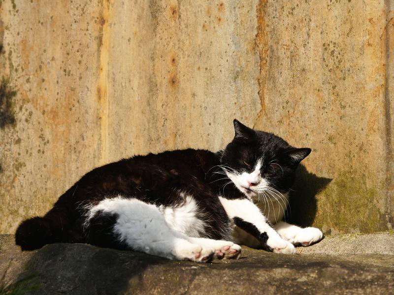 石碑の前で日光浴の黒白猫