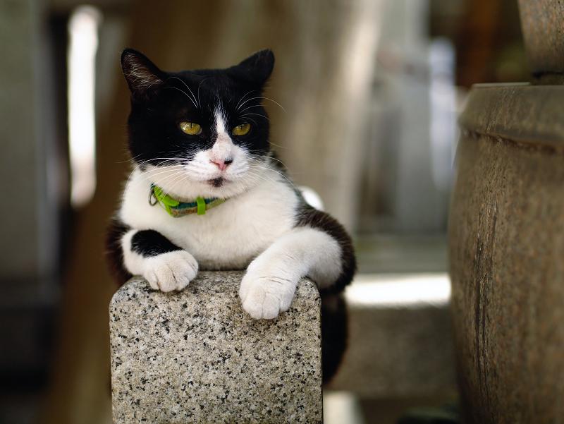 玉垣で休憩中の黒白猫
