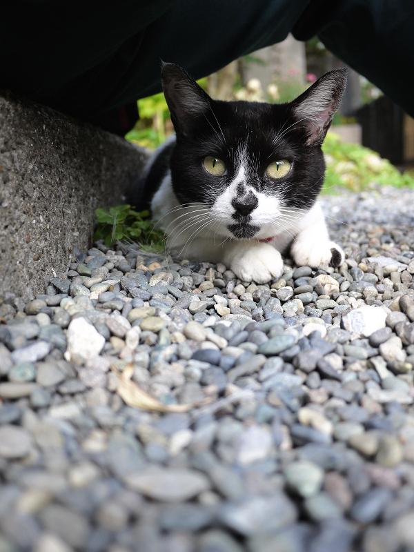 足の下で不思議な表情をみせる白黒猫
