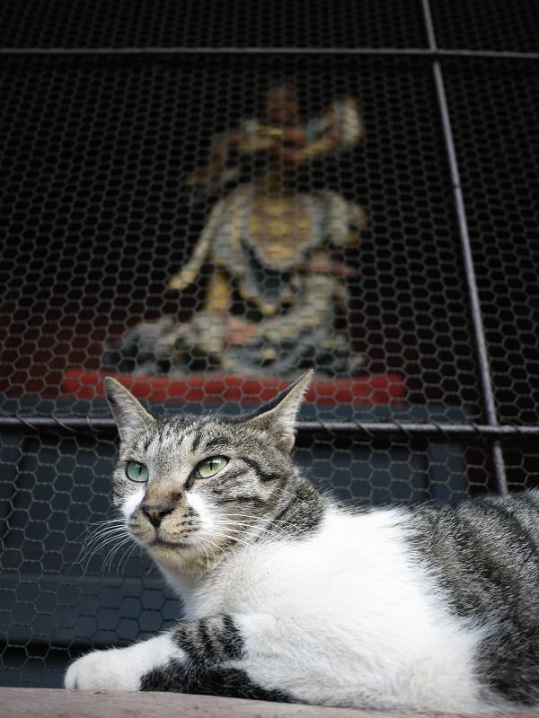 金網と四天王とキジ白猫1