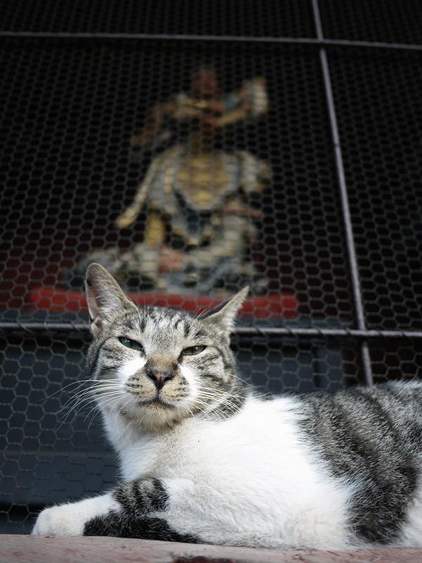 金網と四天王とキジ白猫2