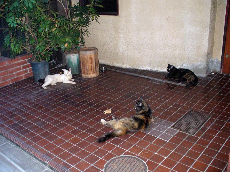 スナックの前の猫たち1