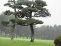 2016.6.21神奈川・千葉3