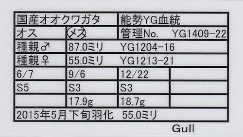 Gull-YG1409-22.jpg