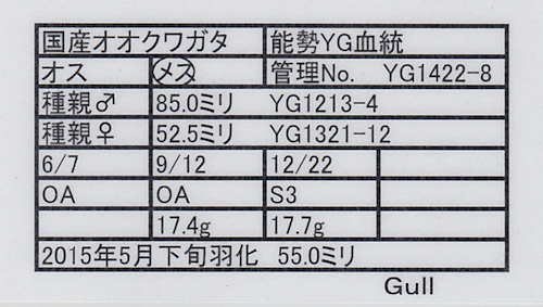 Gull-YG1422-8.jpg