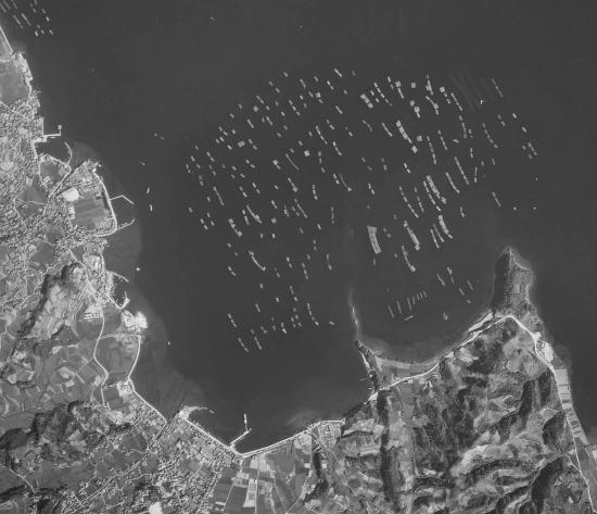 1966 09 13(S41)かき筏