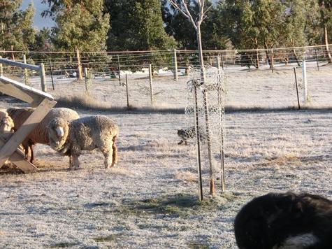 羊の国のビッグフット「マイナス10度のファーム・キャット」4