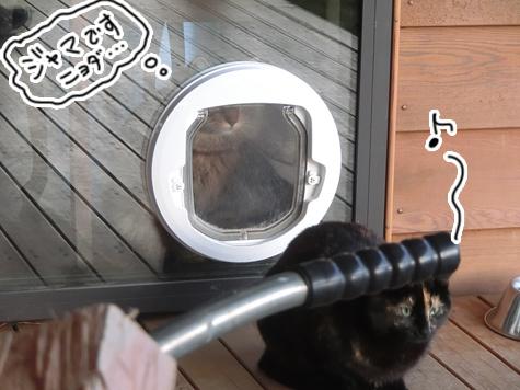 羊の国のビッグフット「猫ドアのドラマ」3