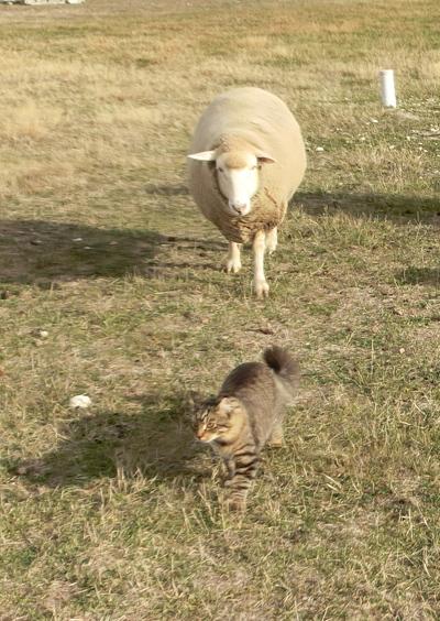 羊の国のビッグフット「こまち旅立ちの日」3