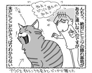 12092016_cat4.jpg