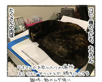 14092016_cat3.jpg