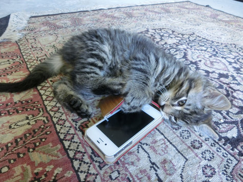 羊の国のビッグフット「猫とデジタル機器」5