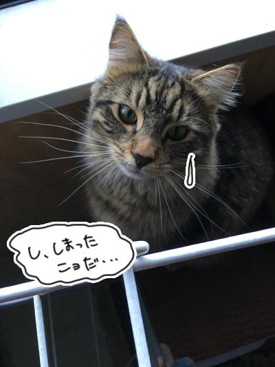15092016_cat5.jpg