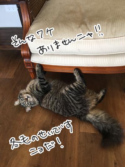 15092016_cat6.jpg