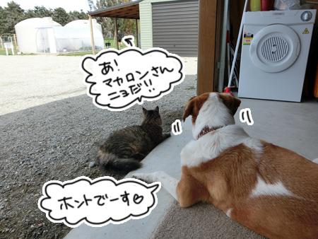 羊の国のビッグフット「カウンセラーあっくん(アーネスト)の、犬のお悩み相談」4