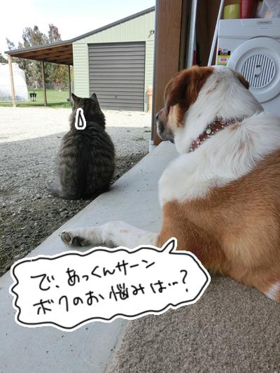 羊の国のビッグフット「カウンセラーあっくん(アーネスト)の、犬のお悩み相談」5