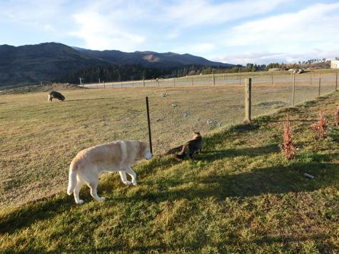 羊の国のビッグフット「中と外では・・・?」7