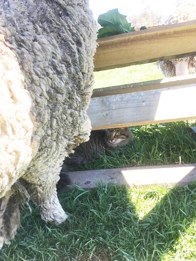 羊の国のビッグフット「ファームキャットでよかったね」5