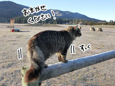 羊の国のビッグフット「シープ・キャット」2
