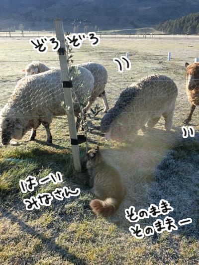 羊の国のビッグフット「シープ・キャット」5