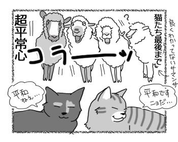 19082016_cat4mini.jpg