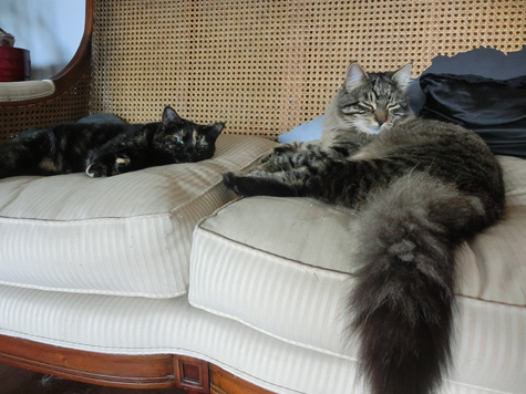 羊の国のビッグフット「猫らしく」4