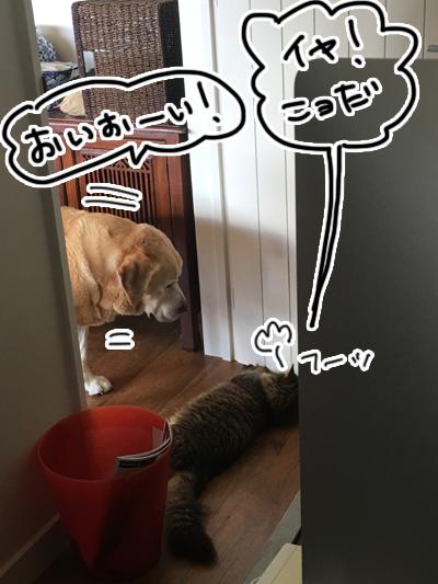 羊の国のビッグフット「犬猫コント」2