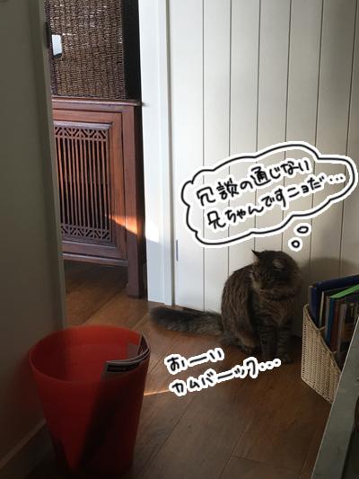 羊の国のビッグフット「犬猫コント」6