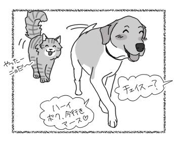 22082016_cat2.jpg