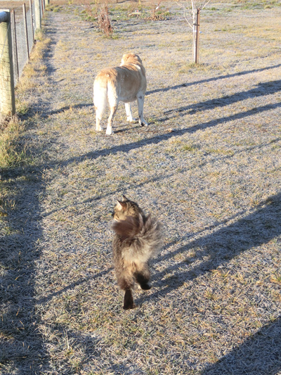 羊の国のビッグフット「後追い、はじめました」5