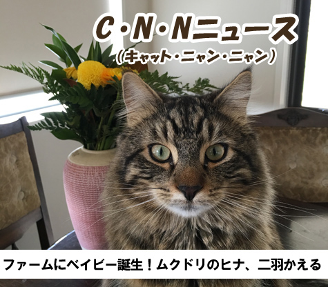 23102016_cat1.jpg