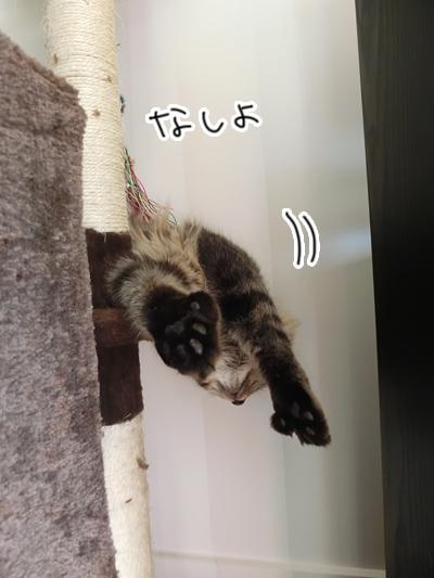 26062016_cat9.jpg