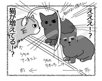 26072016_cat2.jpg