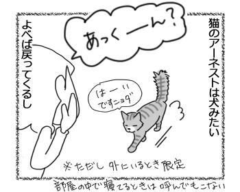 27062016_cat1.jpg