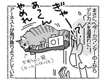 27082016_cat2.jpg
