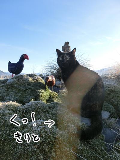 28082016_cat1.jpg