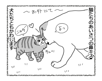 29072016_cat1.jpg