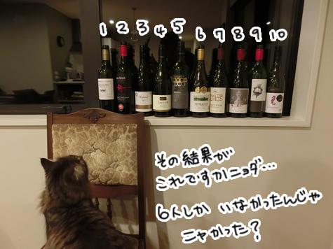 31072016_cat5.jpg