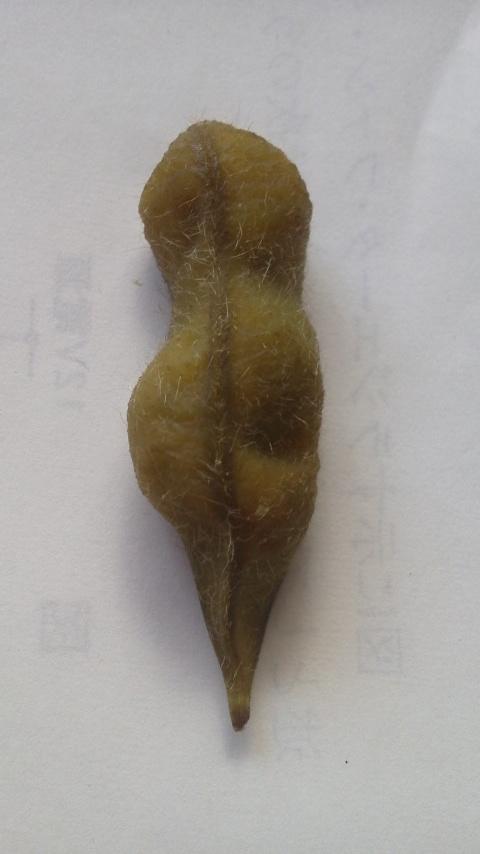 ツチノコ枝豆