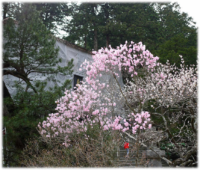image輪王寺_04